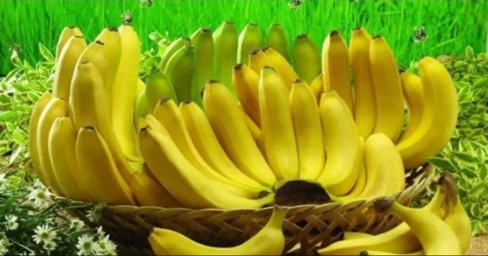 If You Are Banana Lover Read These 10 Shocking Facts (No. 4 Is Very Important)