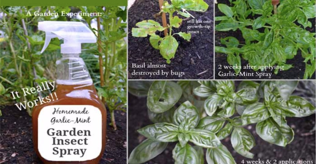 Make This Homemade Garden Insect Spray To Keep The Bugs At Bay