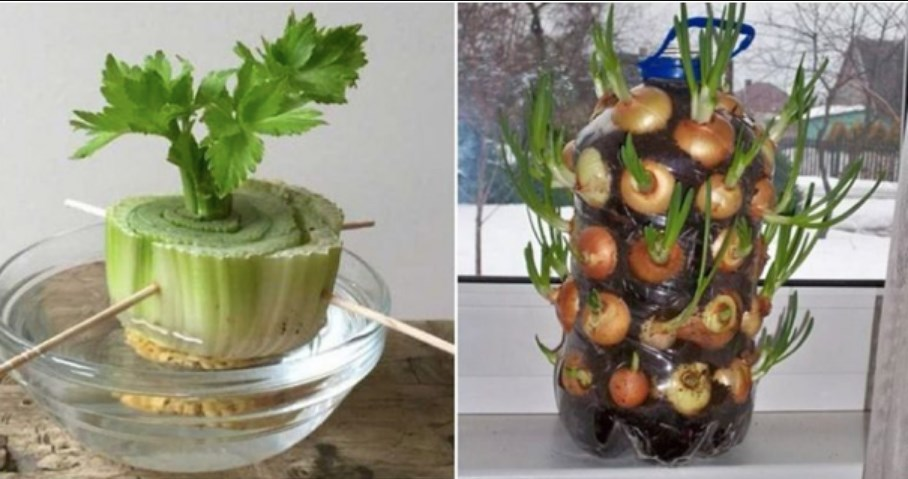 Save Your Scraps People Here Are 20 Plants You Can Easily Regrow At Home
