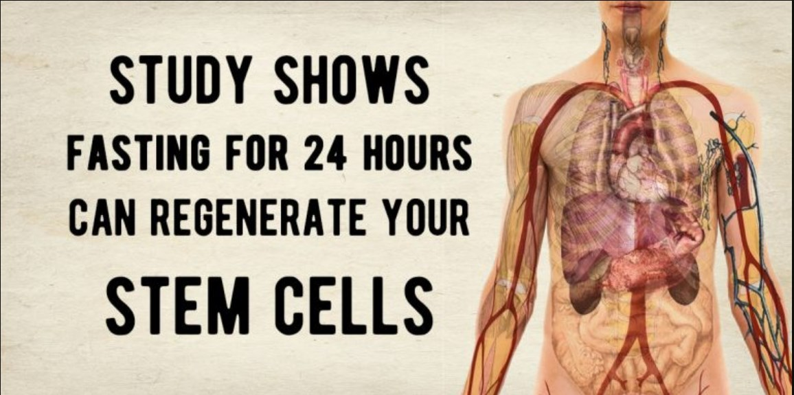 Study Shows Fasting For One Day Can Regenerate Your Stem Cells