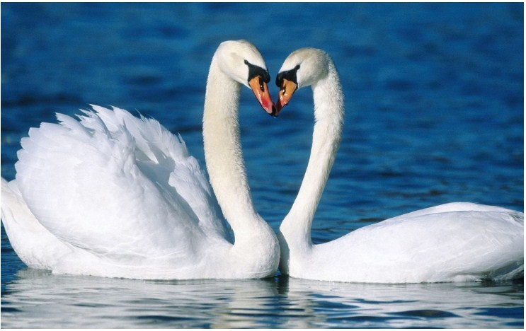 Top 10 Wonderful Animals That Can Teach Us How To Love And Be Faithful