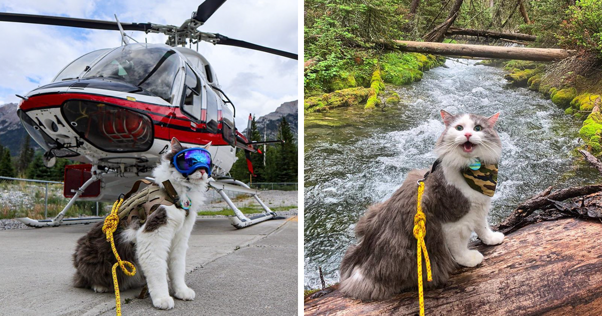Meet Gary, An Adventurous Cat That Loves Hiking And Meowtaineering