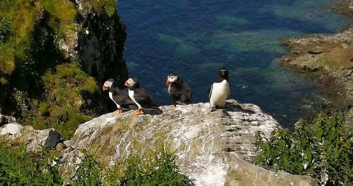 I Traveled To Scotland To See Its Beautiful Nature And Watch Rare Birds (32 Pics)