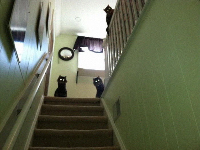People Are Posting Pics Of Animals With Threatening Auras, And Here Are 45 Of The Best Ones
