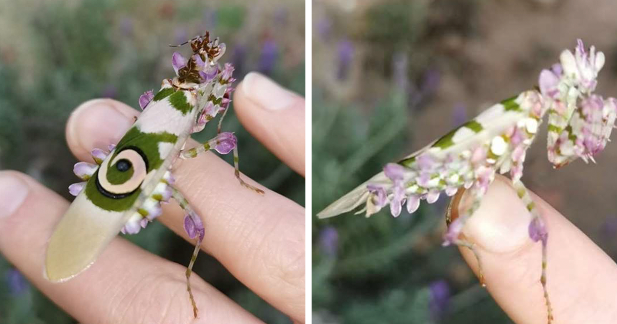 This Woman Found A Bug That Even People Who Hate Insects Might Find Beautiful