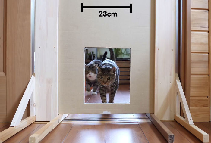 Person Wants To Find Out How Narrow A Gap Can Cats Squeeze