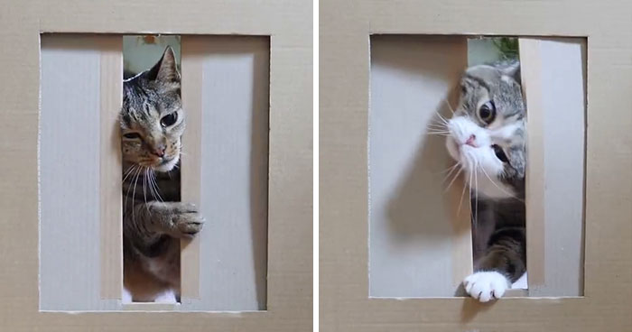 Person Wants To Find Out How Narrow A Gap Can Cats Squeeze Through, Conducts This Hilarious Experiment