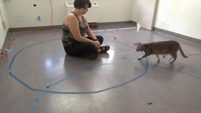 Кошки связаны со своими владельцами