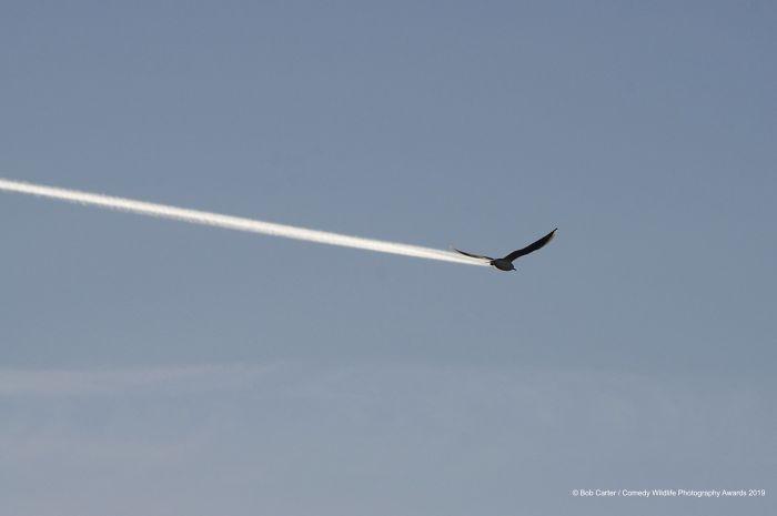 ¿Es un pájaro, es un avión?