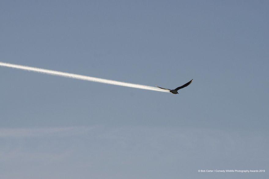 Is It A Bird, Is It A Plane?