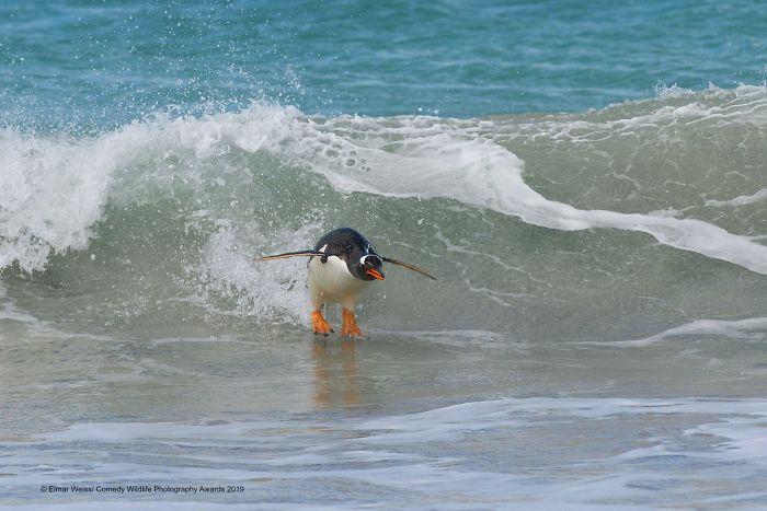 Surfeando por el Atlántico Sur