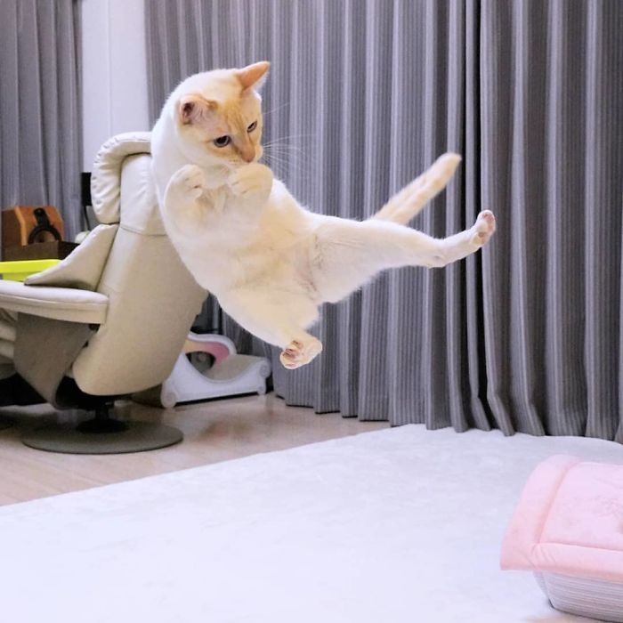 dancing cat chaco wakaponsan 5d89dff0e3e0f  700