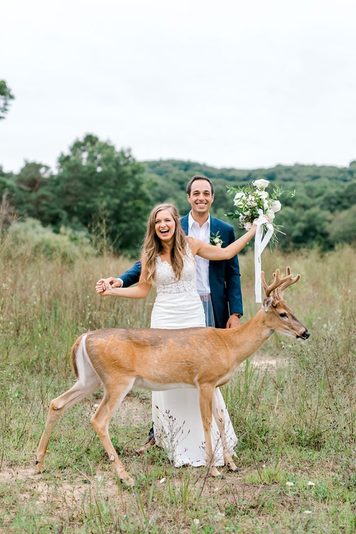 Wedding Photo Shoot Gets Interrupted By A Deer Results In 15 Funny And Adorable Pictures Bored Panda