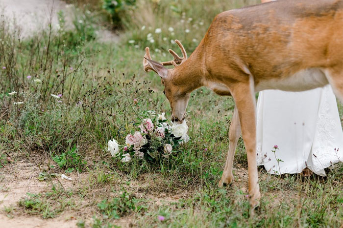 Wedding Photo Shoot Gets Interrupted By A Deer, Results In 15 Funny And Adorable Pictures