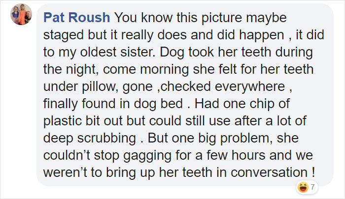 Family Spends Hours Looking For Grandma's Lost Dentures Only To Find Them In Their Dog's Mouth