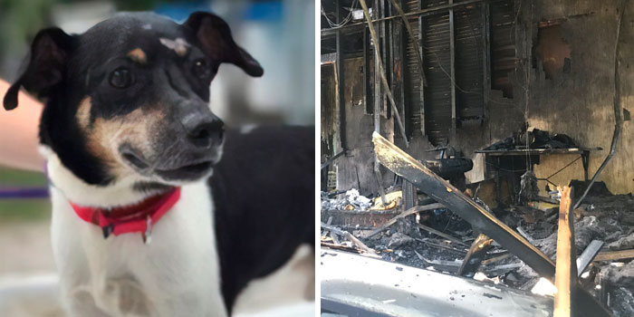 Hero Dog Sacrifices Himself To Save His Entire Family From Fire
