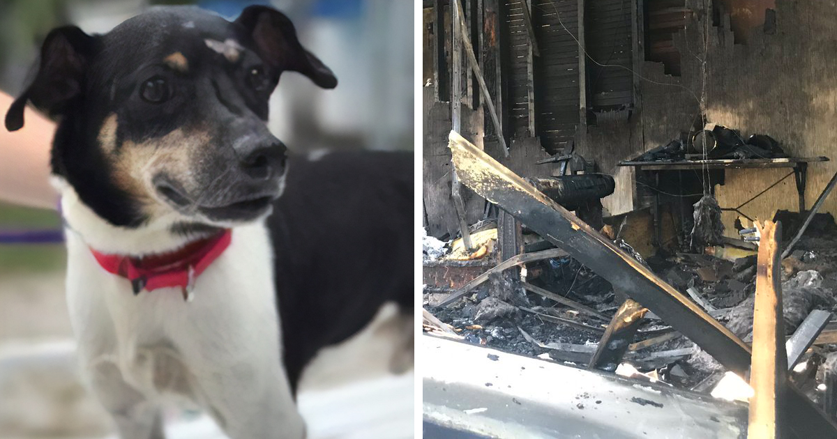 Hero Dog Sacrifices Himself To Save His Family From Fire