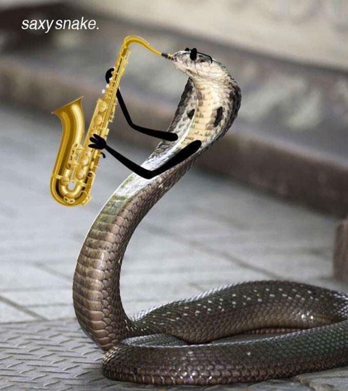 Jazz Snake