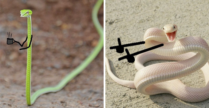 People Are Doodling On Snake Pics And The New Scenarios Are Hilarious (30 Pics)