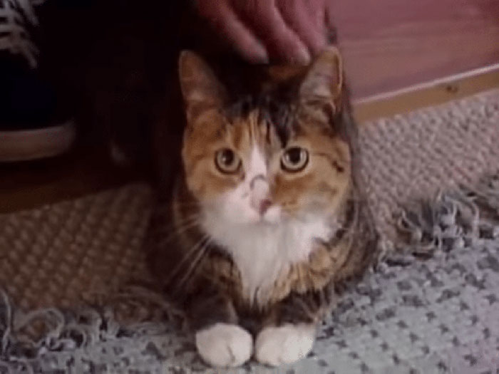 Tiger, A Kitty Who Saved Her 97-Year-Old Owner From 4 Pit Bulls