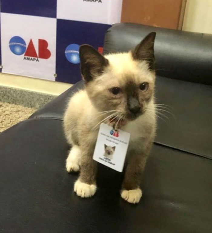 Some People Started Filing Complaints About A Stray Kitty Roaming This Law Firm So They Hired Him
