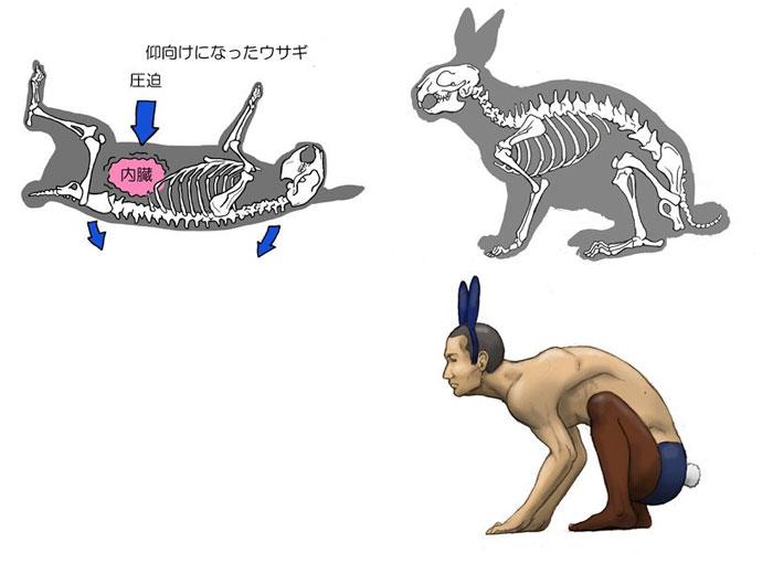 Satoshi-Kawasaki-iepure