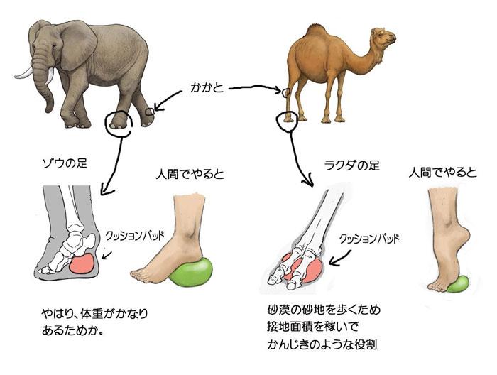Satoshi-Kawasaki-elefant-camila