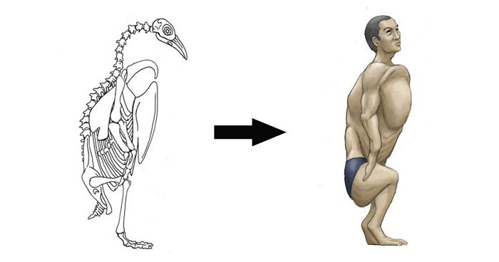 Japanese Guy Imagines Humans With Skeletons Based On Different Animals, Explains The Science Behind Them