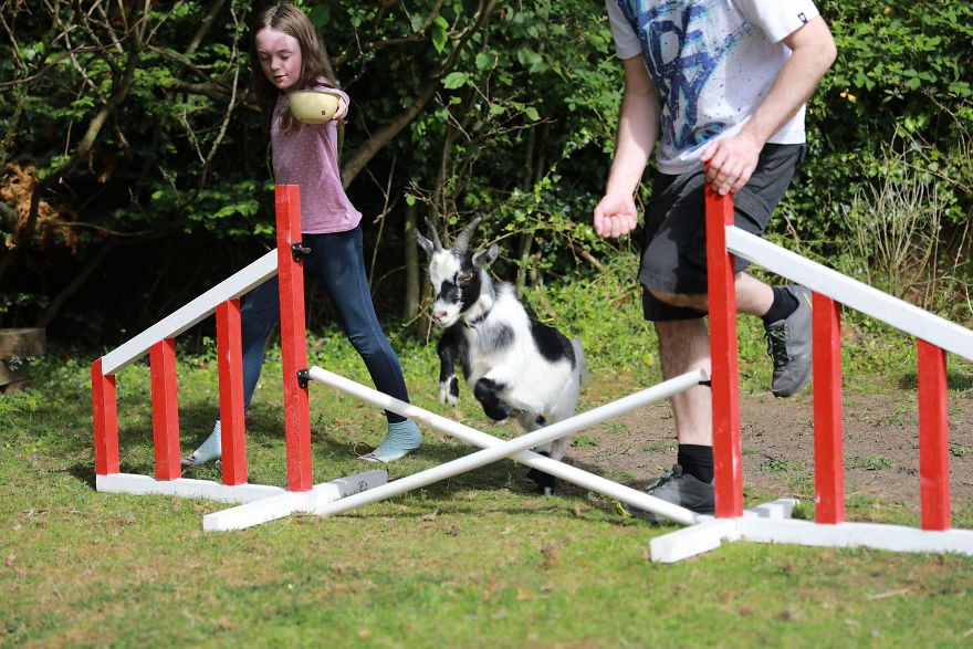 Meet Our Animals Who Help Special Needs Children In Ways That We, Humans, Struggle To