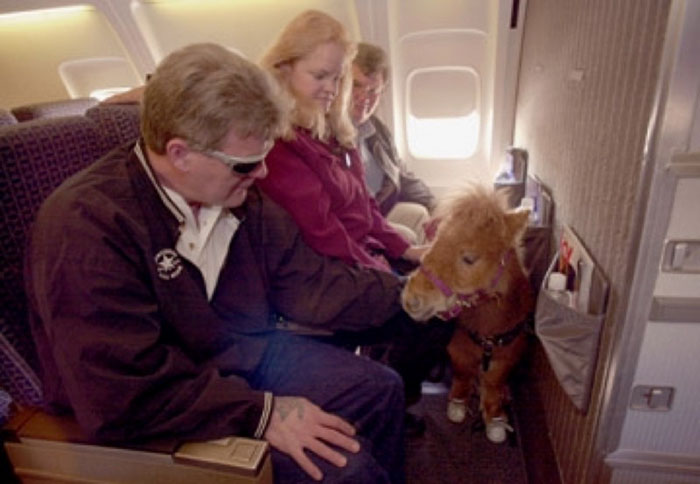 Pony On Flight