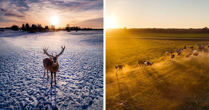 I Photograph Animals Using My Drone