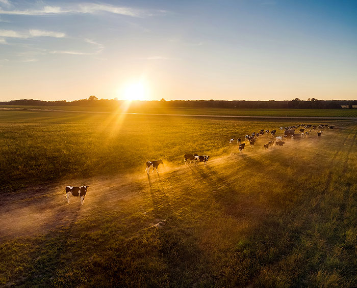 I Photograph Landscapes And Animals In Lithuania Using A Drone