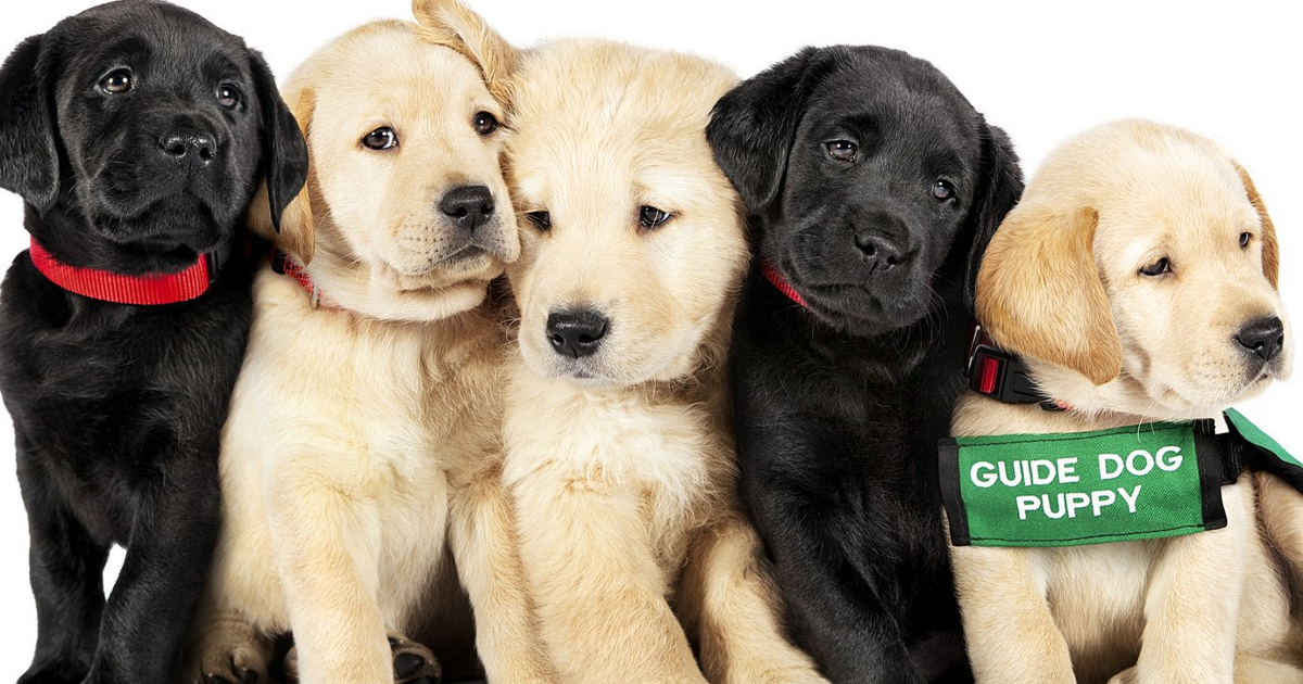 Netflix Adds An Adorable Documentary Following 5 Puppies' Journeys To Becoming Guide Dogs