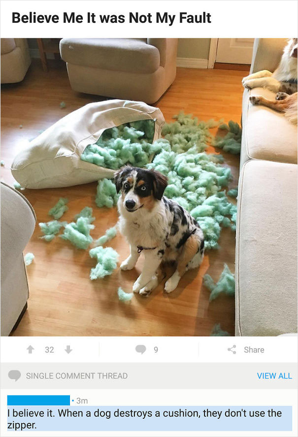 """I Have Severe Trust Issues With Any """"Pet Shaming"""" Picture These Days"""