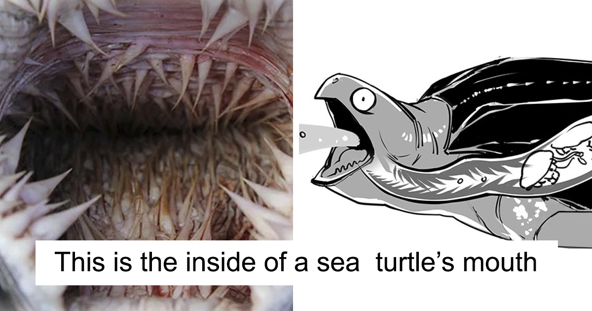 Sea Turtles Have Terrifying Mouths And This Person Explains The Science Behind It