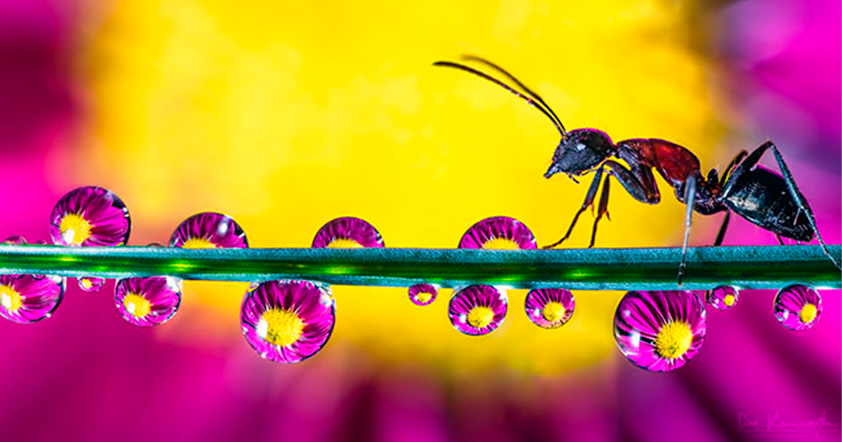 Photographer Explores The Universe At Our Feet With Macro Photos Of Droplets In Nature