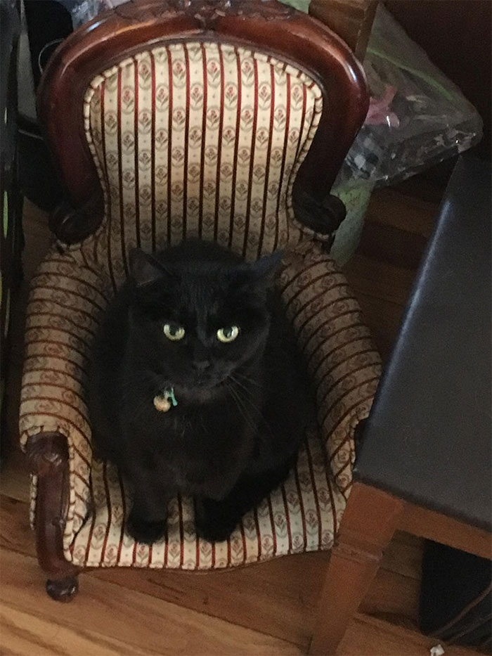 Wilhelmina Slater (Aka Willie) Loves Her Chair. I Think She Needs A Couch