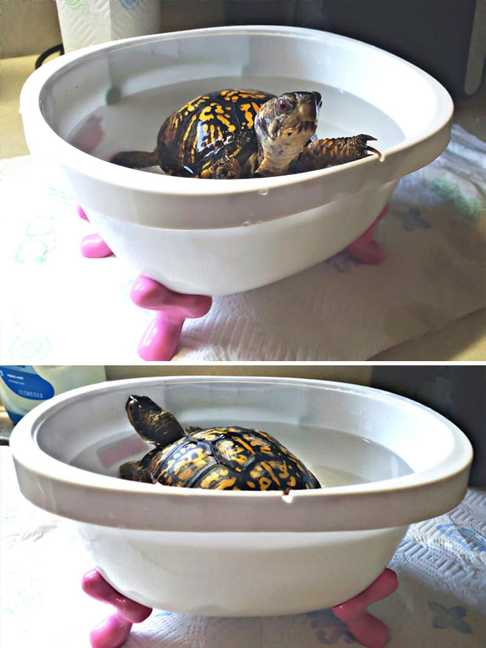 Minature Clawfoot Tub: $.50. Watching My, Bathtime-Loving, Turtle's Eyes Light Up, Because She Can Now Bathe In Style: Priceless -Found At A Goodwill In Clarksville, TN