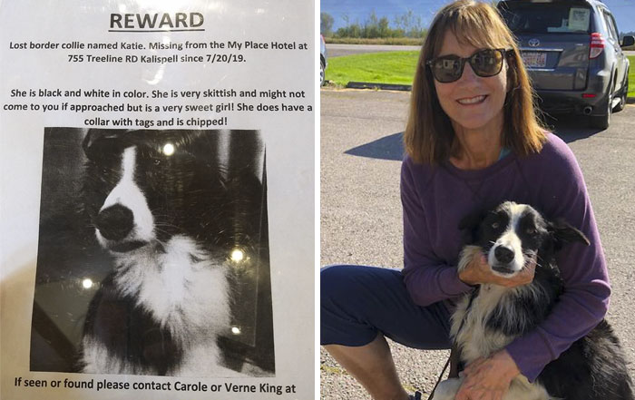 Woman Quits Her Job And Spends 57 Days Looking For Her Lost Dog, Finally Finds Her In Another State
