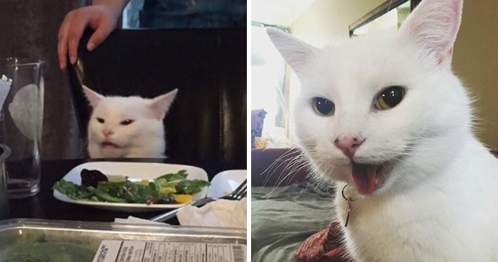 Turns Out, The Pawsome Cat From 'Woman Yelling At A Cat' Meme Is Named Smudge And His Instagram Is Adorable