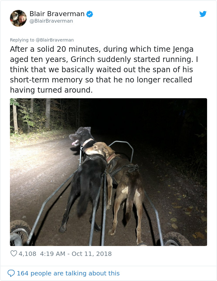 Woman Documents How Her Lovely But 'Dumb As A Box Of Rocks' Sled Dog Took Her Home And It's Hilarious