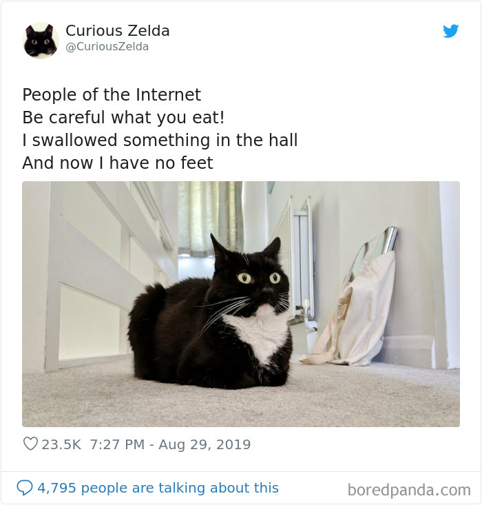 Funny-Cat-Tweets-Curious-Zelda