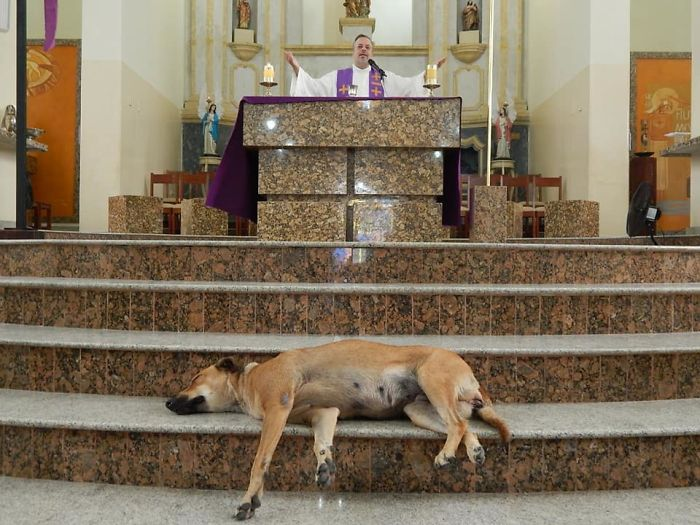 A Kind Priest Brings Stray Dogs To Mass So They Can Find New Families