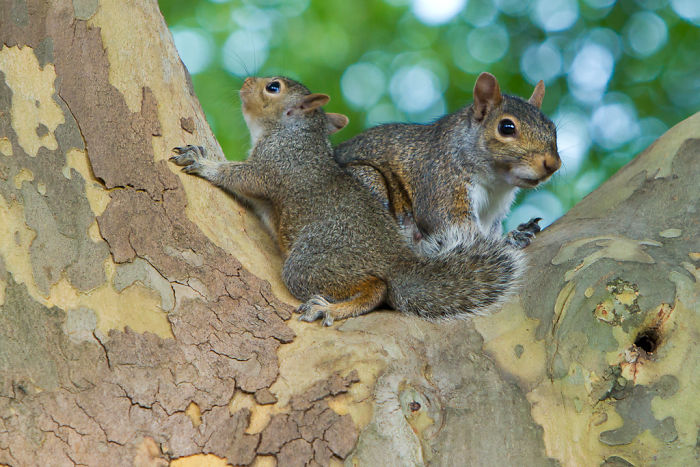 Squirrels Adopt Other Baby Squirrels If They're Orphaned