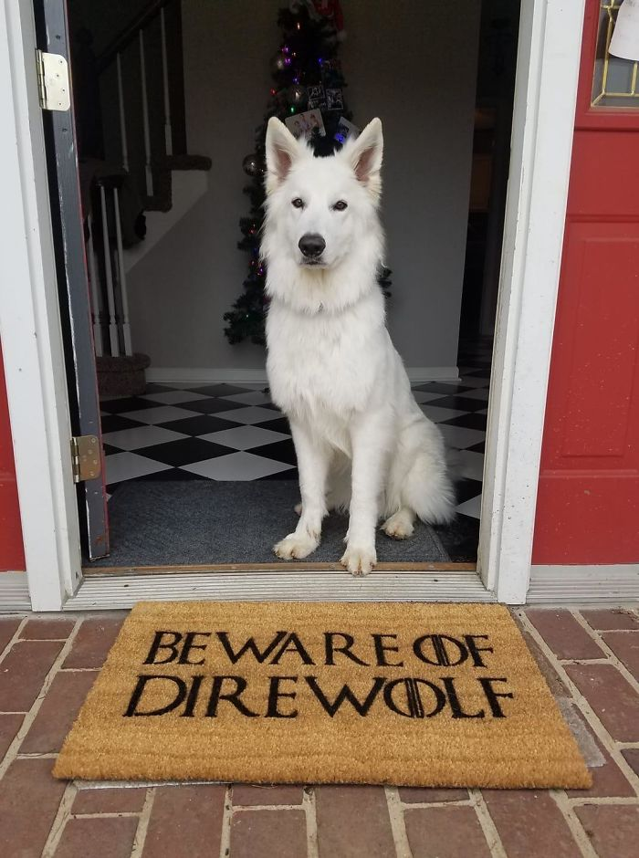 My Friend Got The Best Possible Doormat For Christmas