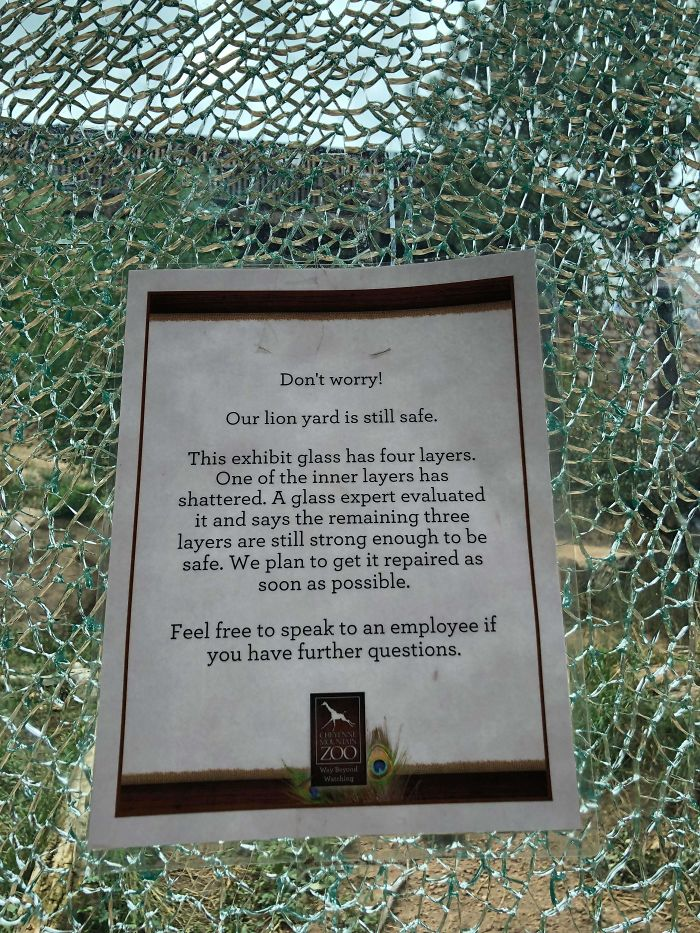 No Worries, 3 Layers Of Glass Still Remain To Protect You From The King Of The Jungle