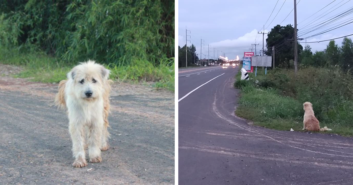 Dog Waits 4 Years In The Same Spot Until He Finally Gets Reunited With Owners Who Lost Him