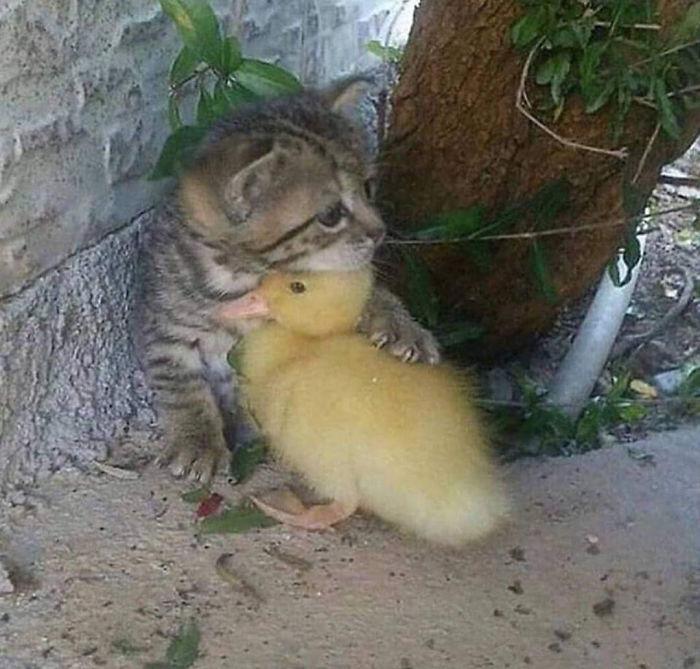 Wholesome-Cute-Duck-Pics