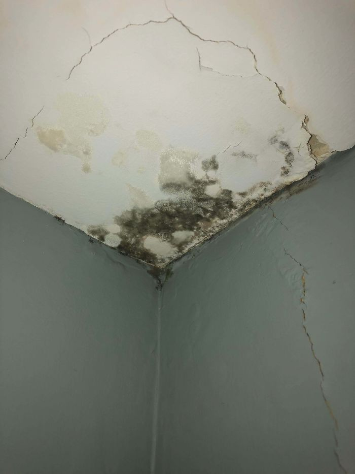 A Leak My Landlord Refuses To Fix. Is This Mold? Is It Dangerous?