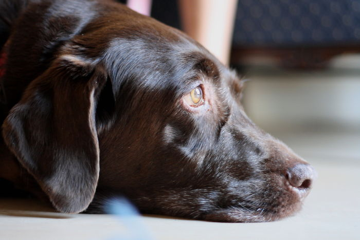 Dogs Can Tell When You're Due To Come Home By How Much Of Your Scent Is Remaining In The House